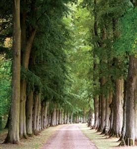 nature-walk-scene